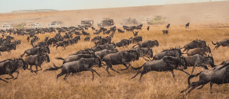 Great Migration Tanzania