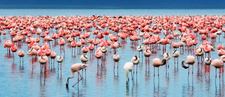 Bird at  Lake Manyara