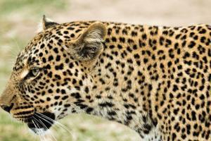 Tanzania Safaris and Adventure